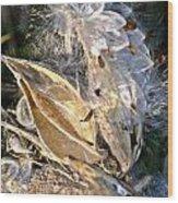 Milkweed II Wood Print
