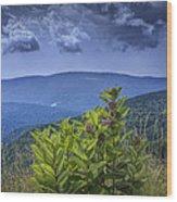 Milkweed Plants Along The Blue Ridge Parkway Wood Print