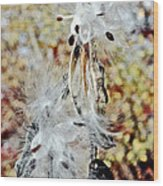 Milkweed Pod On Hart-montague Trail In Northern Michigan Wood Print
