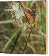Milkweed Pod Wood Print