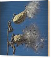 Milkweed Pods On A Blue Background  Wood Print