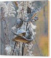 Milkweeds In Autumn Wood Print