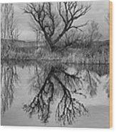 Mill Pond Tree Wood Print
