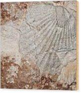 Million Years Ago 1 Wood Print