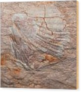 million years ago 2 - An enormeous shell fossile in top of cova des coloms in Es Migjorn - Menorca Wood Print