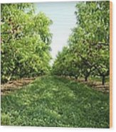 Millions Of Peaches Wood Print