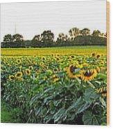 Millions Of Sunflowers Wood Print by Danielle  Parent