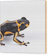 Mimic Poison Dart Frog Wood Print