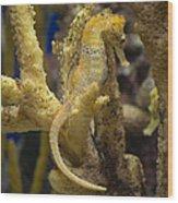 Mimic Seahorse Wood Print
