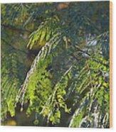 Mimosa At Sunset Wood Print