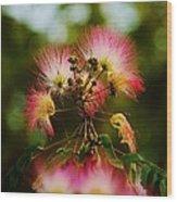 Mimosa Blooms Wood Print