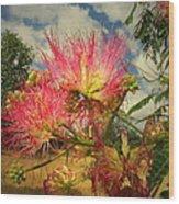 Mimosa Blossoms Wood Print