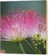 Mimosa Wood Print