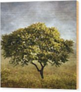 Mimosa Magic Wood Print