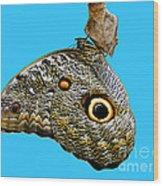 Mindo Butterfly Wood Print by Al Bourassa