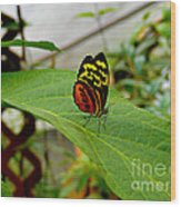 Mindo Butterfly Poses Wood Print
