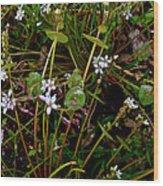 Miner's Lettuce In Park Sierra-ca Wood Print