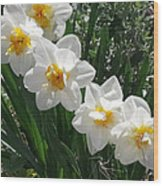 Miner's Wife Daffodils Wood Print