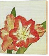 Minerva 2 Wood Print