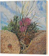Mini Cactus Garden In Rock Wood Print