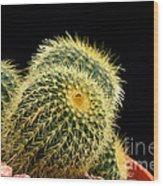 Mini Cactus In A Pot Wood Print