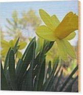 Mini Daffodils Wood Print