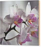 Mini Orchids 1 Wood Print