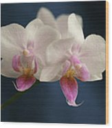 Mini Orchids 2 Wood Print