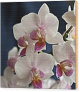 Mini Orchids 3 Wood Print