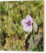 Mini Wild Flower Wood Print