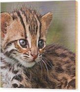 Miniature Leopard Wood Print by Ashley Vincent
