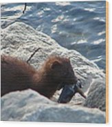 Mink With A Round Goby Wood Print