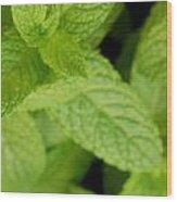 Mint Wood Print