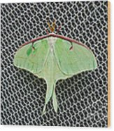 Mint Green Luna Moth Wood Print
