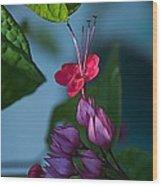 Miracle Vine Wood Print