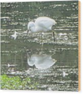 Mirror Image Of The Snowy Egret Wood Print