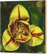 Mirrored Tulip Time Wood Print