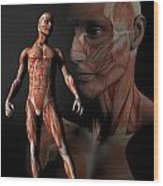 Misc. Anatomy Images Wood Print