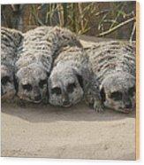 Mischievous Meerkats Wood Print