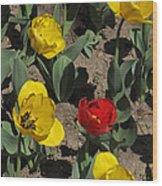 Misplaced Tulip   #0934 Wood Print