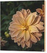 Miss Amara Dahlia Wood Print