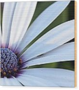 Mission Flower 4480 Wood Print