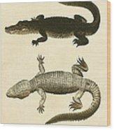 Mississippi Alligator Wood Print