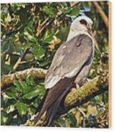 Mississippi Kite Wood Print