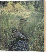 Mississippi River Headwaters Wood Print