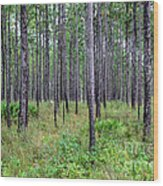 Mississippi Woods Wood Print