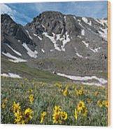 Missouri Mountain And Wildflower Landscape Wood Print