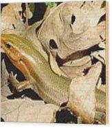 Missouri Skink Wood Print