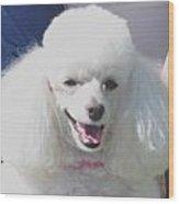Missy White Poodle Wood Print