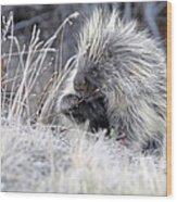 Mister Porcupine - Denali Alaska Wood Print